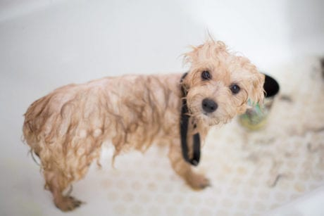 Choosing The Right Shampoo For Your Dog