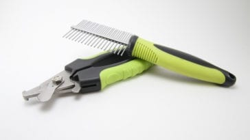 Dog Clipper Tips and How To
