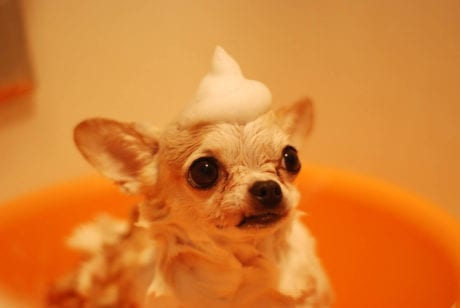 How To Bath Your Dog