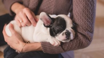How To Massage Your Dog Tips and Guide
