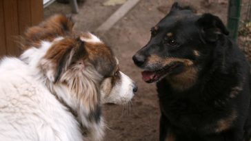 What To Do When You Welcome A Second Dog