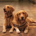 Choosing Your Dog's Gender: Male or Female ?