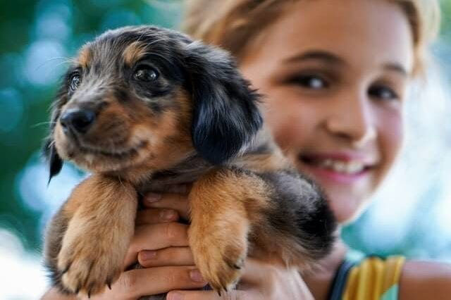 How To Choose The Right Dog For Your Children?