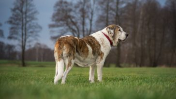 How To Feed Large Dog Breeds