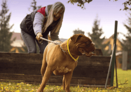 5 Important Things To Teach Your New Dog When It Arrives Home