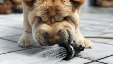 How Much Water Should You Give Your Dog?