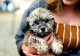 Why Should You Adopt a Small Dog Breed?