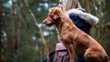 Why Should You Choose a Medium Dog Breed?