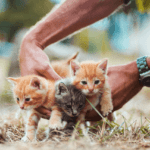 The Guide To Vaccinating Your Kitten