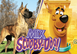 What Type of Dog Is Scooby Doo: Is It a Great Dane?