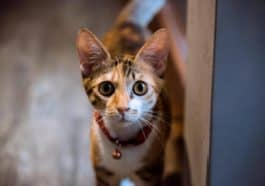 Read This Before You Adopt A Female Cat